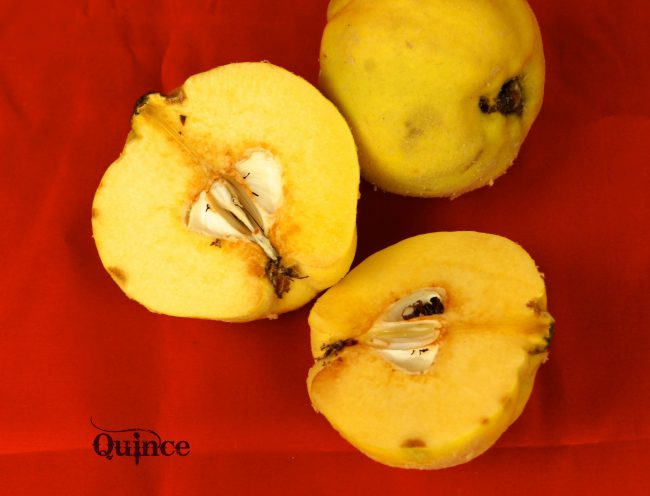 Quince - What is it?